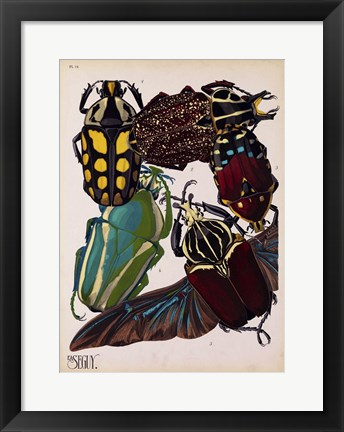 Framed Insects, Plate 3 Print