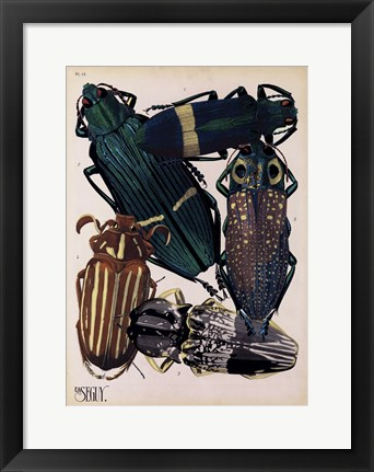 Framed Insects, Plate 4 Print