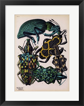 Framed Insects, Plate 6 Print