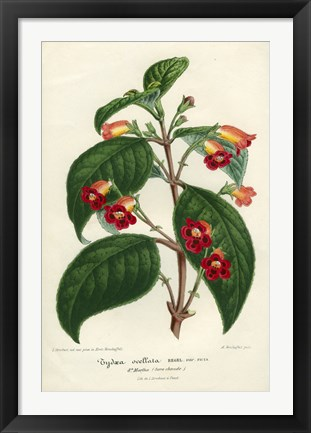 Framed Kohleria of Central America Print