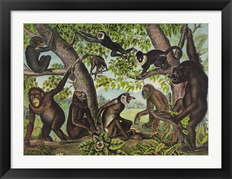 Framed Monkeys Print