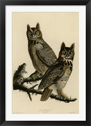 Framed Great Horned Owl Print