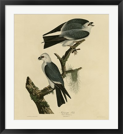 Framed Mississippi Kite Print