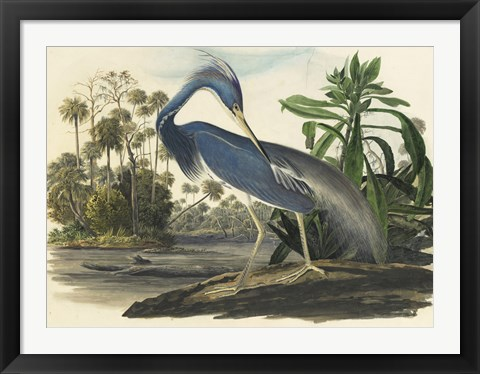 Framed Blue Heron Print