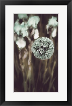 Framed Allium Mint Print