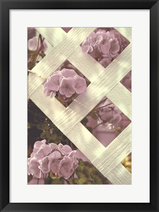 Framed Lattice Print