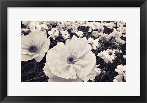Framed White Poppy Field Print