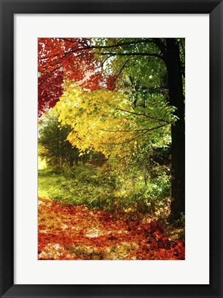 Framed New England Autumn III Print