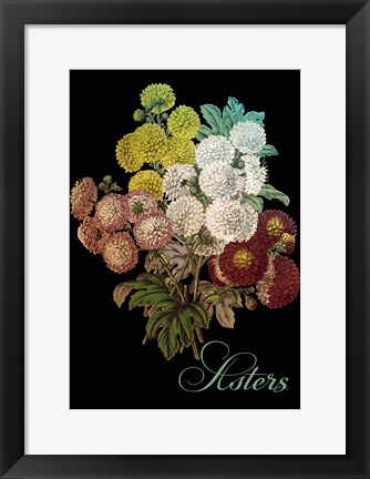 Framed Asters Print