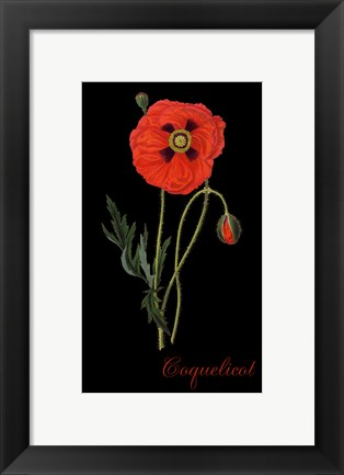 Framed Coquelicot Print
