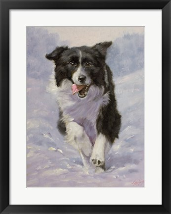 Framed Border Collie 3 Print