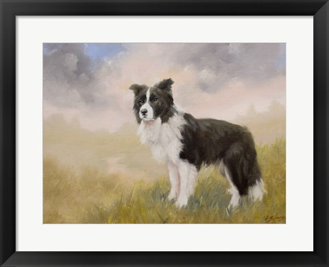 Framed Border Collie 5 Print