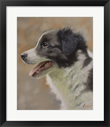Framed Border Collie 9 Print
