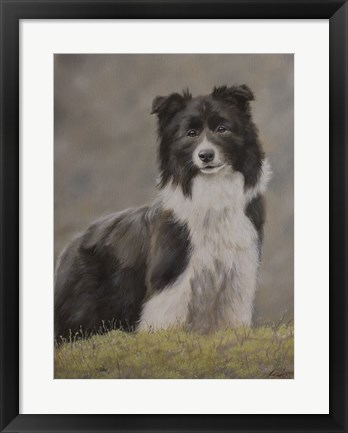 Framed Border Collie 10 Print