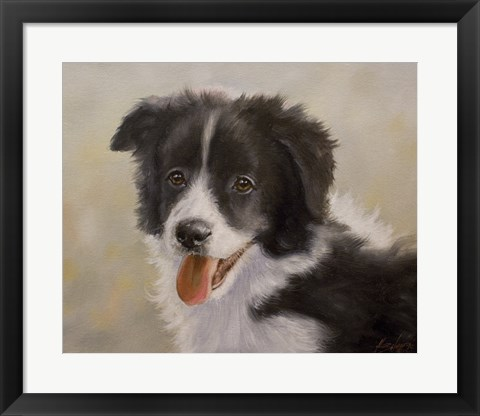Framed Border Collie 11 Print