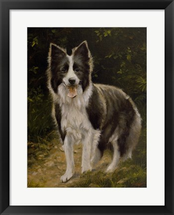 Framed Border Collie 14 Print