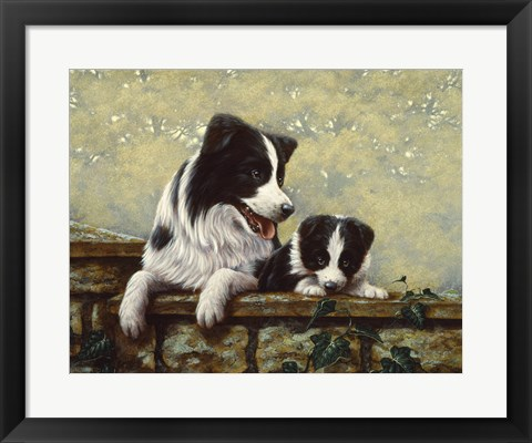 Framed Border Collie 15 Print
