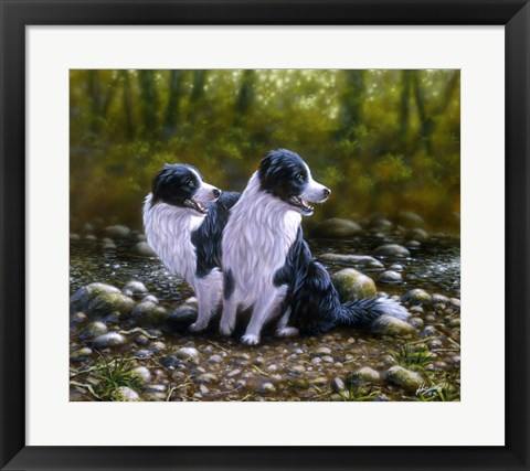 Framed Border Collie 17 Print
