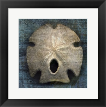 Framed Arrowhead Sand Dollar Print