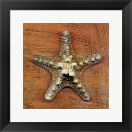 Framed Armored Starfish Print