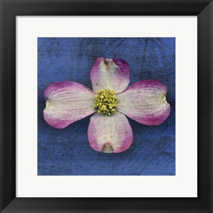 Framed Pink Dogwood Print