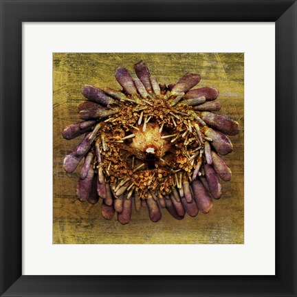 Framed Sea Urchin 2 Print