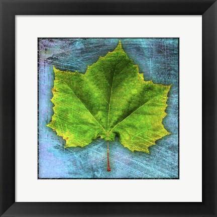 Framed Sycamore Print