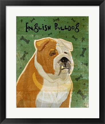 Framed English Bulldog Tan and White Print