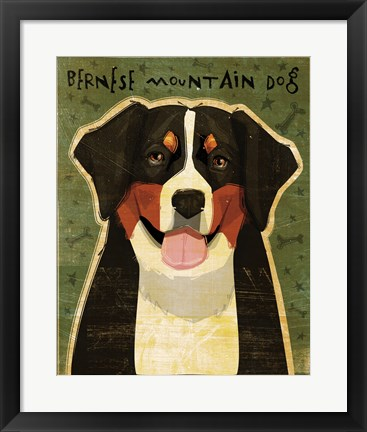 Framed Bernese Mountain Dog Print