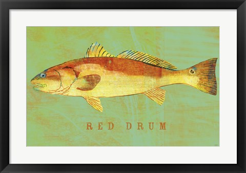 Framed Red Drum Print