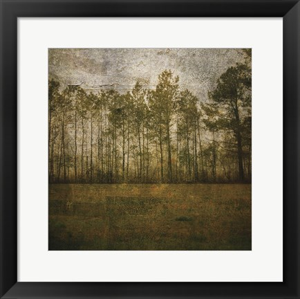 Framed Line of Pines Print
