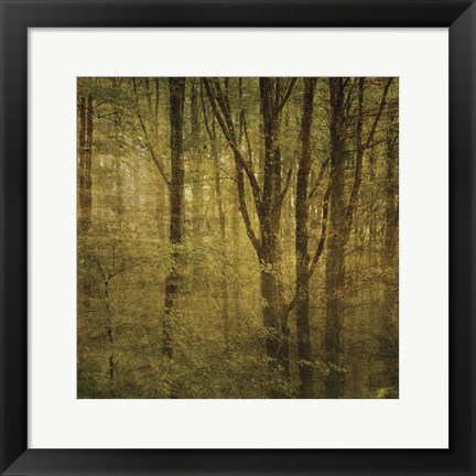 Framed Fog in Mountain Trees No. 2 Print