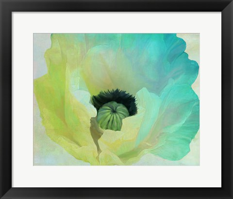 Framed Poppy Gradient I Print