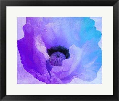 Framed Poppy Gradient IV Print