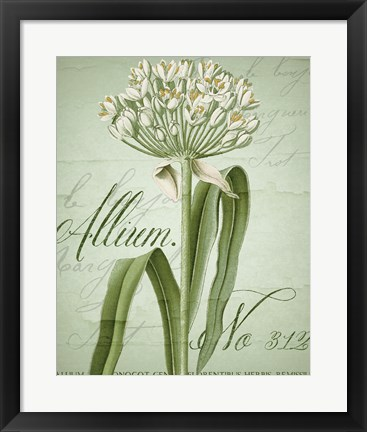Framed Allium I Print