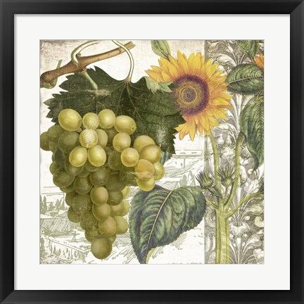 Framed Dolcetto III Print