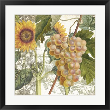 Framed Dolcetto IV Print