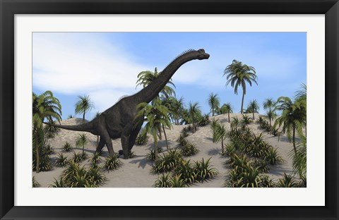 Framed Large Brachiosaurus in a Tropical Environment Print