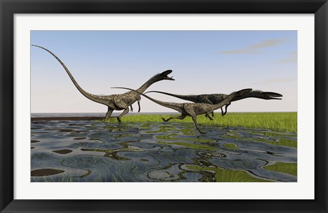 Framed Group of Coelophysis Dinosaurs Print