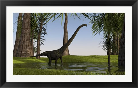 Framed Mamenchisaurus Walking through Swamp Print
