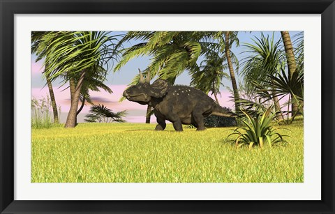 Framed Triceratops Roaming a Tropical Environment Print