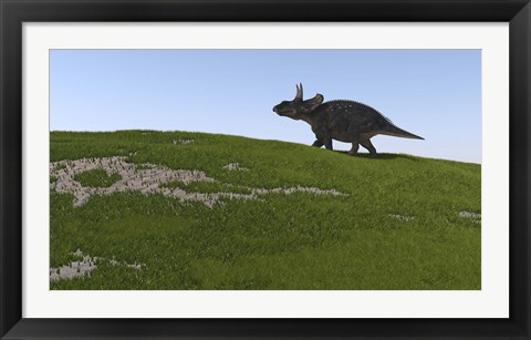 Framed Triceratops Walking Across a Grassy Field Print