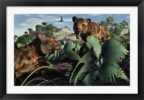 Framed Sabre-Toothed Tigers in Pleistocene Time Print