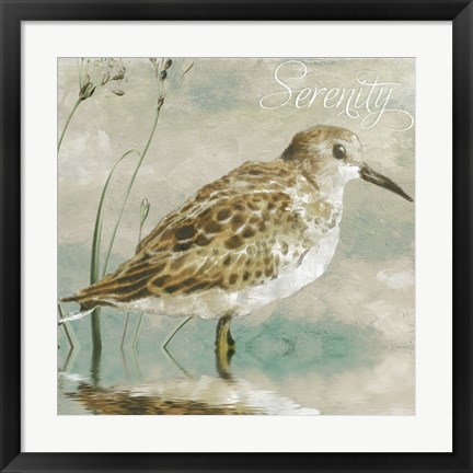 Framed Sand Piper I Print