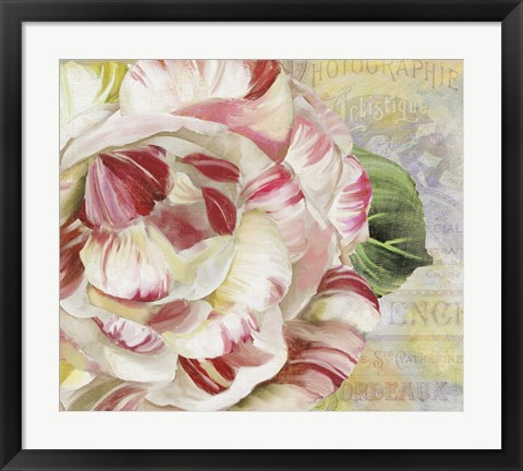 Framed Camellias II Print