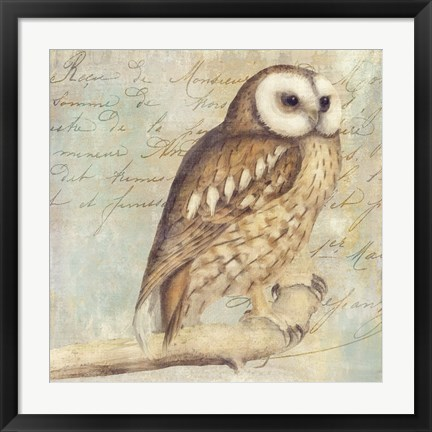 Framed White-Faced Owl Print