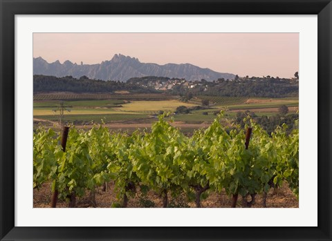 Framed Spring Vineyards with Montserrat Mountain, Catalonia, Spain Print