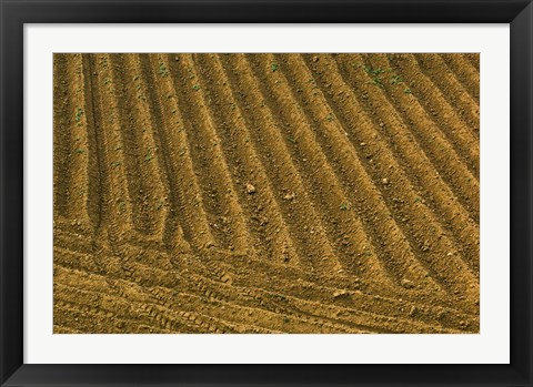 Framed Tilled Ground Ready for Planting, Brinas, La Rioja, Spain Print
