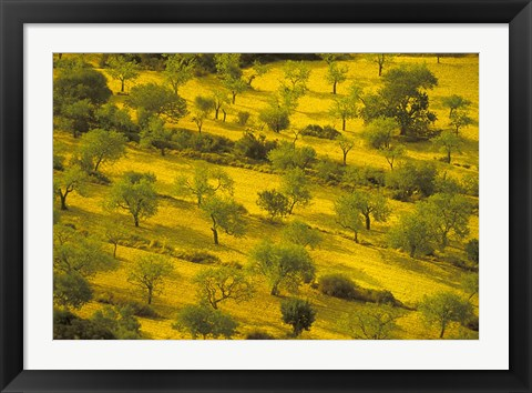 Framed Morning View of Farmland, Mallorca, Balearics, Spain Print