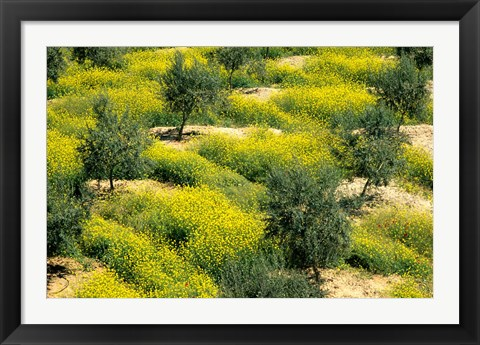Framed Olive Trees, Provence of Granada, Andalusia, Spain Print